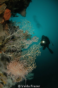 A pink basket star at 45m that I loved and visited often.... by Valda Fraser 